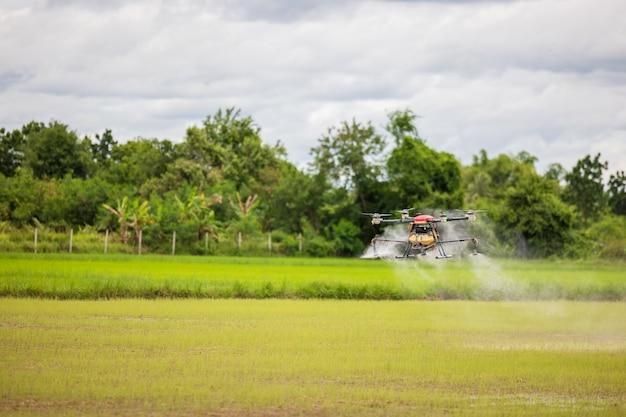 Landwirtschaftsdrohnen fliegen über reisfelder und streuen dünger, hochauflösende fotos von industriedrohnen, die chemikalien auf reisfelder und felder sprühen
