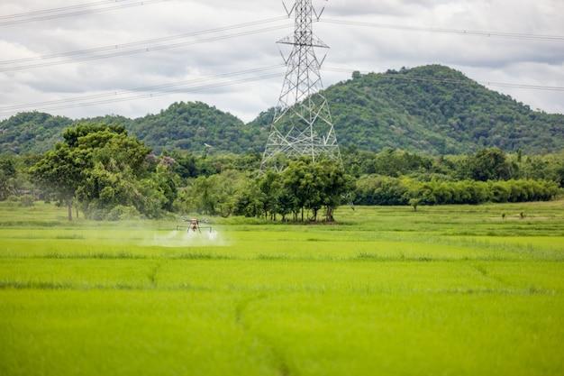 Landwirtschaftsdrohnen gleiten über reisfelder und versprühen dünger. mit einer drohne sprühten bauern dünger auf reisfelder. konzept der agrartechnologie