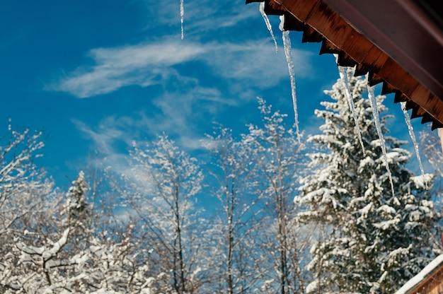Lange, helle, transparente eiszapfen im sonnenlicht, die vom holzdach gegen den wald des blauen himmels des frühlings hängen