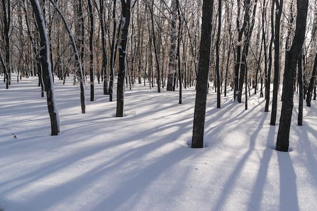 Lange schatten auf schnee im winterwald