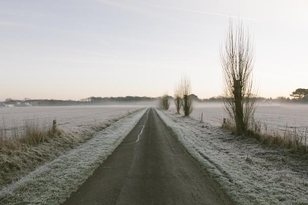 Lange straße umgeben von büschen mit nebelbedeckten bäumen