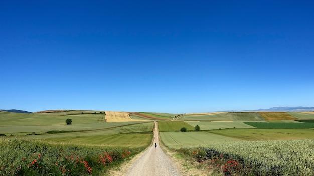 Langer feldweg, der an einem klaren sonnigen tag zur ländlichen farm führt