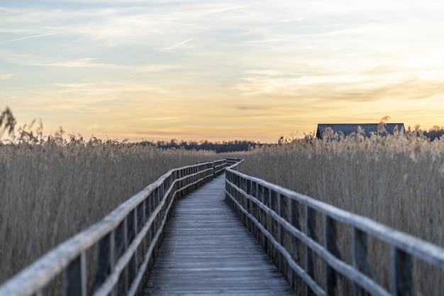Langer hölzerner pier, umgeben von gras während des sonnenuntergangs