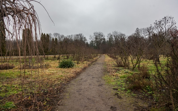 Langer weg im park am bewölkten herbsttag