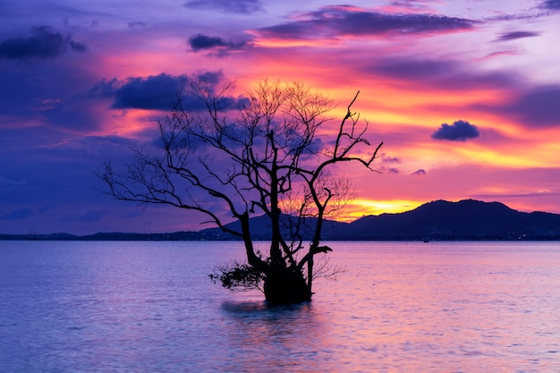 Langes belichtungsbild des drastischen sonnenuntergangs oder des sonnenaufgangs, himmel bewölkt sich über berg mit alleinem baum