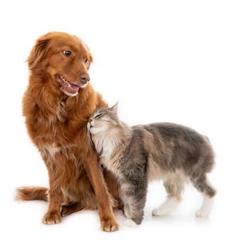 Langhaarige katze, die mit einem hund kuschelt