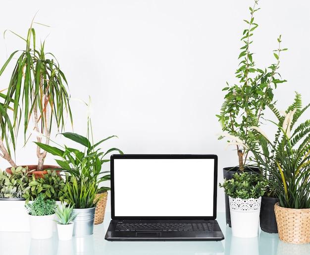 Laptop mit leerem weißem bildschirm zwischen topfpflanzen auf schreibtisch
