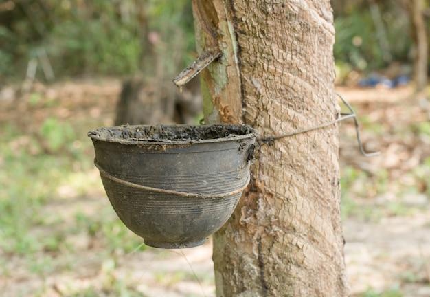 Latex aus gummibaum und schwarzer plastikschale