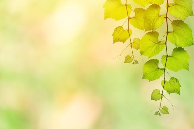 Laub, das an unschärfe grünen naturhintergrund mit platz für text hängt