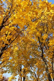 Laub von bäumen in der herbstsaison