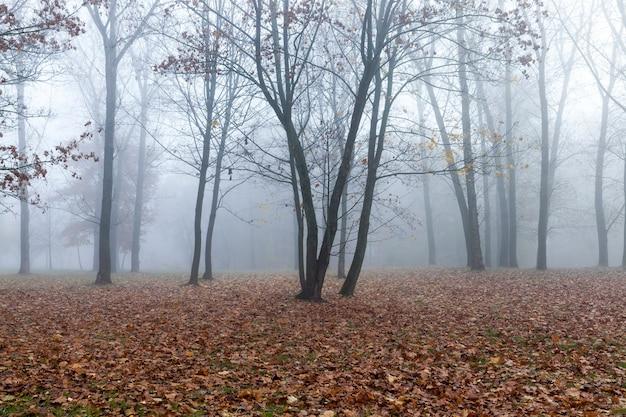 Laubbäume im wald oder im park im herbstblattfall, eiche mit wechselndem blatt, schöne natur mit eiche