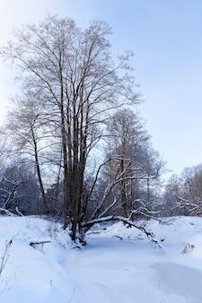 Laubbäume im winter mit schnee und frost bedeckt