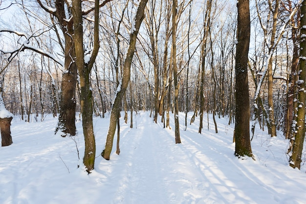 Laubbäume ohne laub in der wintersaison, kahle bäume, die nach schneefällen und schneestürmen mit schnee bedeckt sind