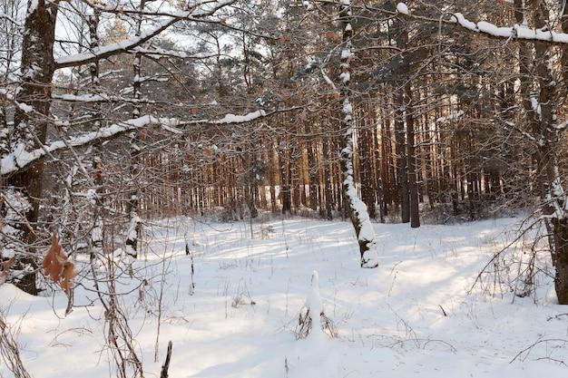 Laubbäume ohne laub in der wintersaison