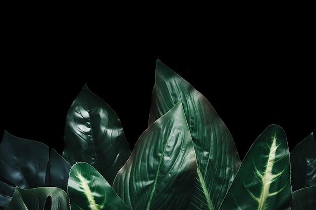 Laubbaum exotisches design grünes laub und sommer abstrakter dschungel oder wald