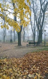 Laubreste, fußgängerweg und fallende trockene blätter im nebligen herbststadtpark