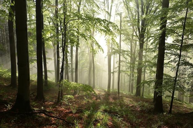 Laubwald des frühlings an einem sonnigen morgen nach regen