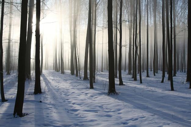 Laubwald im winter an einem nebligen dezembermorgen