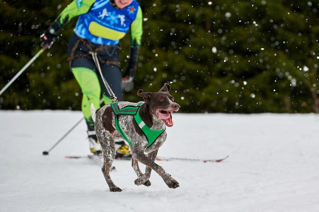 Laufende hunde auf schlittenhunderennen auf schneebedeckter überlandstraße