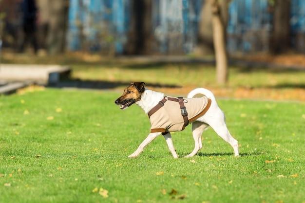 Laufender hund auf gras