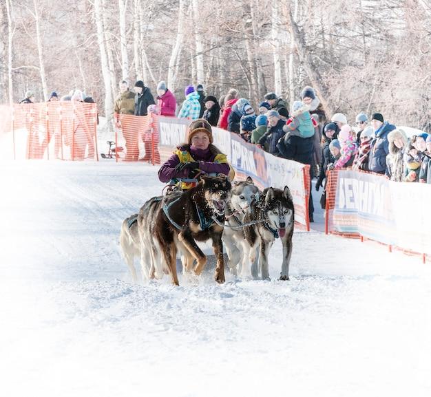 Laufender hundeschlittenteam kamtschatka musher