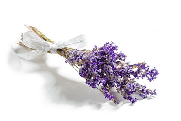 Lavendel blüht bündel
