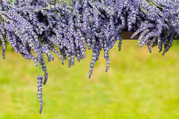 Lavendel blumen grenze. speicherplatz / sommerhintergrund kopieren