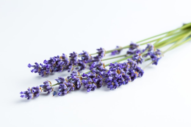 Lavendel blumen isoliert