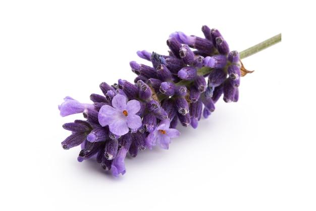 Lavendel blumenstrauß gebunden lokalisiert auf weiß