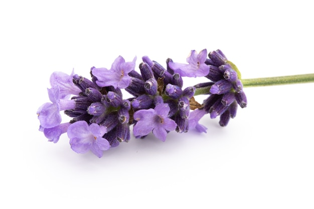 Lavendel blumenstrauß isoliert gebunden.
