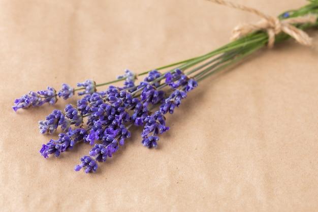 Lavendel bund auf papier