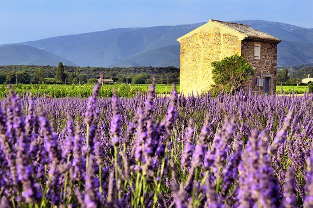 Lavendel in einer wunderschönen landschaft