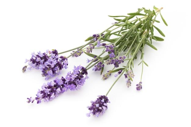 Lavendelblüten auf einer weißen oberfläche.