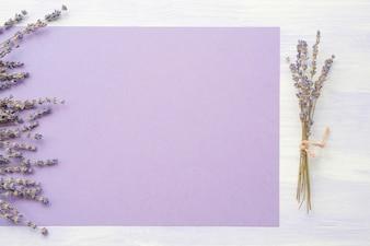 Lavendelblume über dem purpurroten Papier auf Hintergrund
