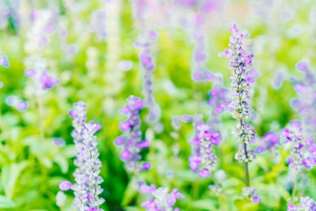 Lavendelblume
