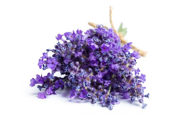 Lavendelblumen auf weiß