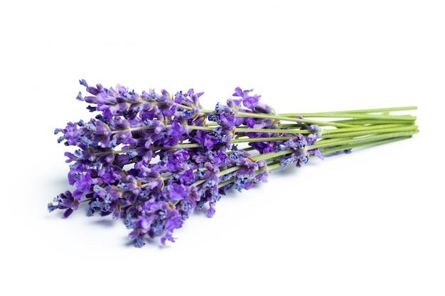 Lavendelblumen auf weißem hintergrund