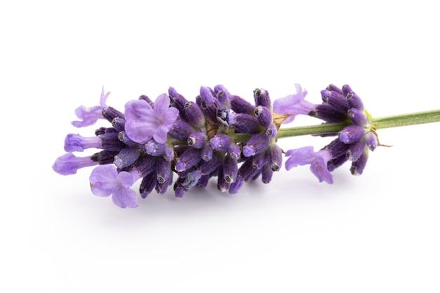 Lavendelblumenstrauß gebunden lokalisiert auf weißem hintergrund.