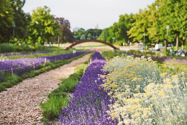 Lavendelblumenwachsen im park von brüssel