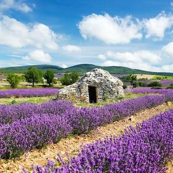 Lavendelfeld und bewölkter himmel, frankreich