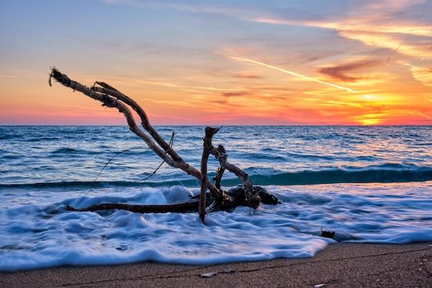 Ld-holzstamm verheddert sich am strand bei wunderschönem sonnenuntergang im wasser