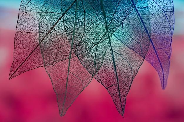 Lebendige, blau gefärbte herbstblätter