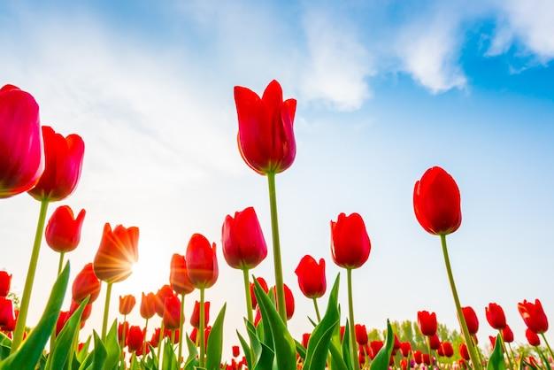 Lebendige schönheit romantische flora natur
