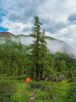 Lebendiges orangefarbenes zelt unter nadelbaum im sommerregenwald. zelt unter baum im nadelwald am hang. malerisches bergwandern im sommer.vertikale ansicht
