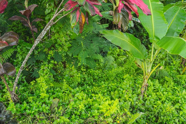 Lebensfreude. große palmblätter wachsen im dschungel, leuchtend grüne farben im hintergrund