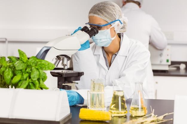 Lebensmittelwissenschaftler, der das mikroskop verwendet