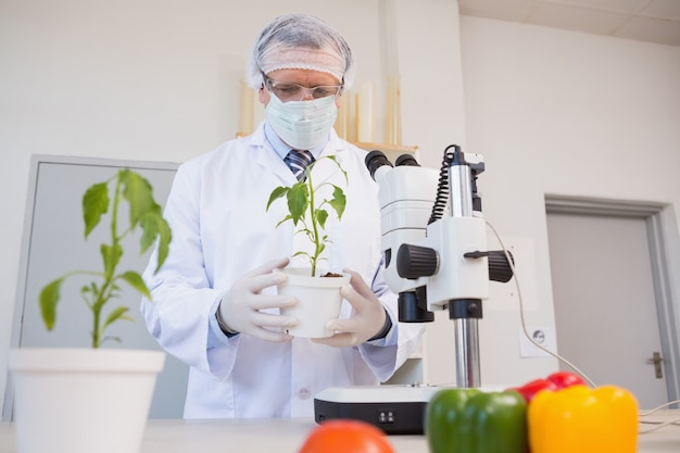 Lebensmittelwissenschaftler, der grünpflanze betrachtet