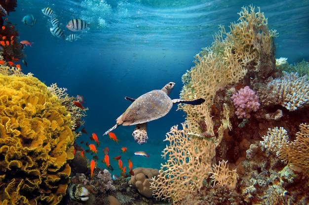 Lebensspendendes sonnenlicht unter wasser. sonnenstrahlen scheinen unter wasser auf das tropische korallenriff.