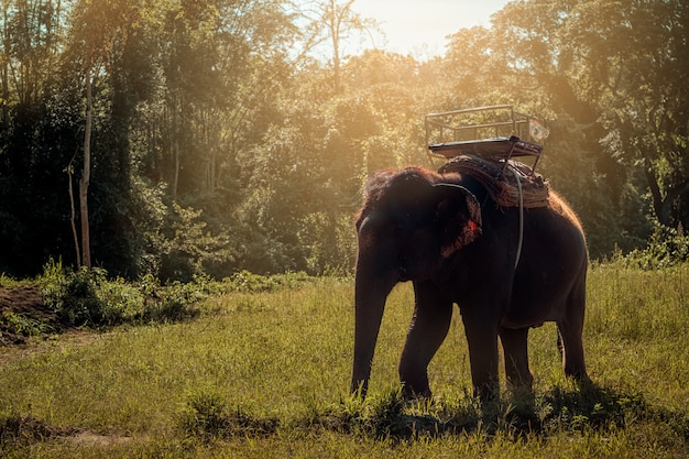 Lebensstil des thailändischen elefanten morgens