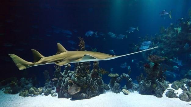 Lebewesen aquarium ocean deep marine